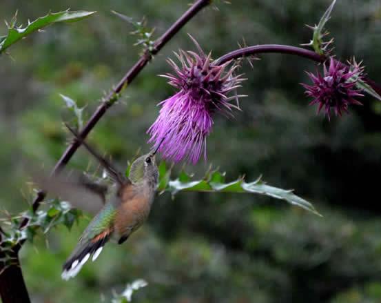 A purple wildflower against vegetation
