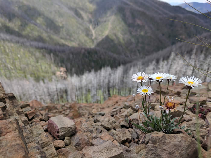 A cluster of delicate white flowers on mountainside
