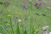 Grouping of yellow & purple wildflowers