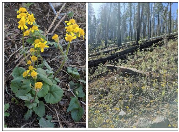 Before and after of fire-damaged forest