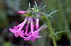 Bright purple-pink wildflowers