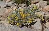 Scrubby wildflowers growing in rocks