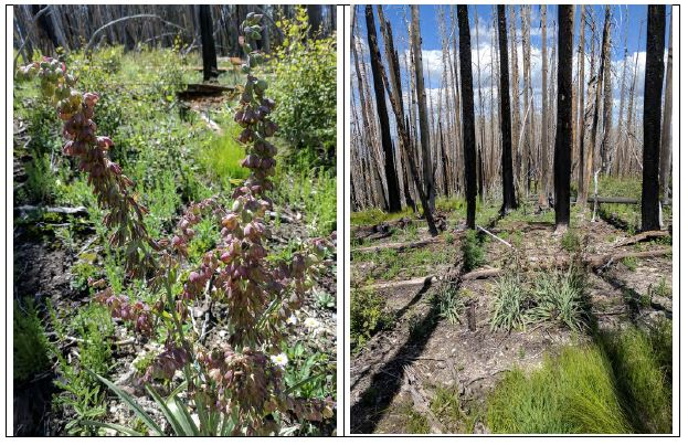 Before and after of forest fire