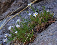 Delicate wildflowers clinging to steep rock face