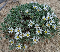 Cluster of white wildflowers