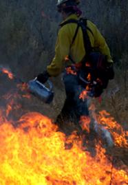 A firefighter walks through fire
