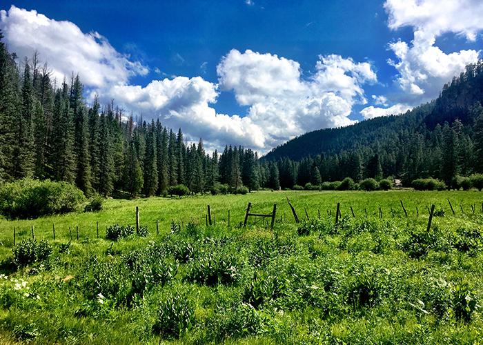 Fence in field