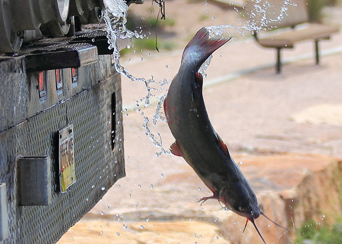 Fish back in water