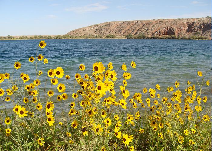 Bottomless Lakes Sunflowers