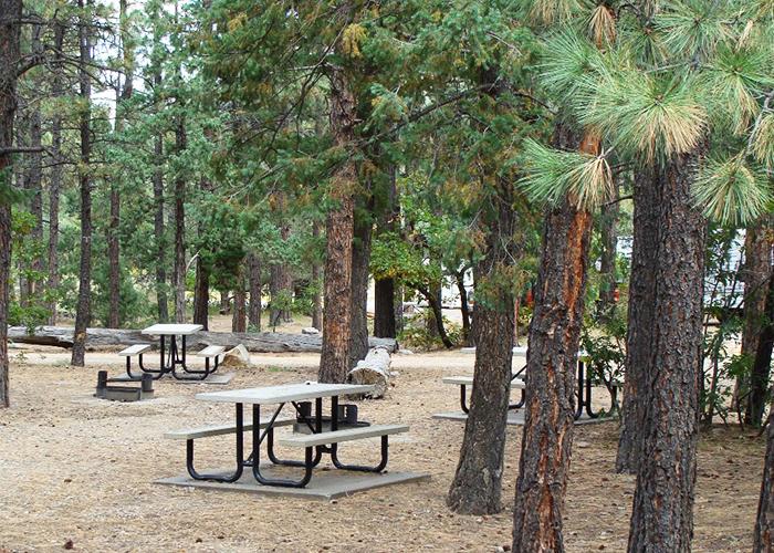 Cimarron picnic area