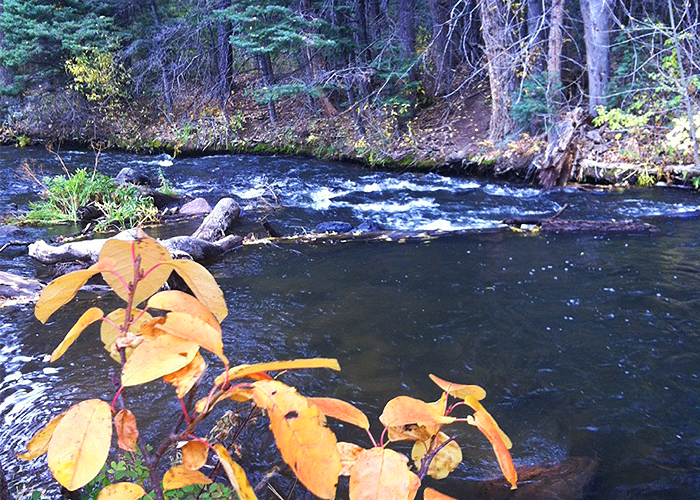 River stream with plants