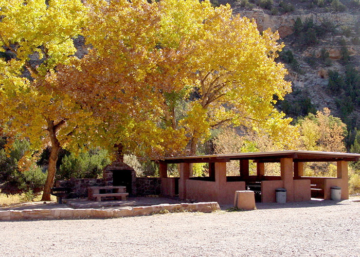 Trees by picnic area