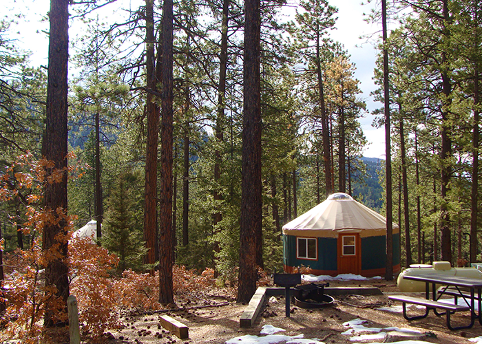 Yurts in forest