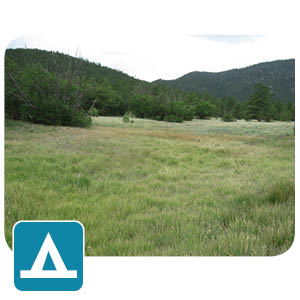 Camping fields
