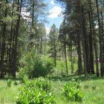 Vista of green forest