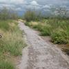 Trail leading through green vegetation