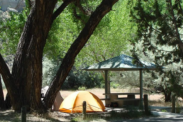 Yellow tent in campsite with shady trees