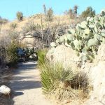 Trail leading through arid landscape